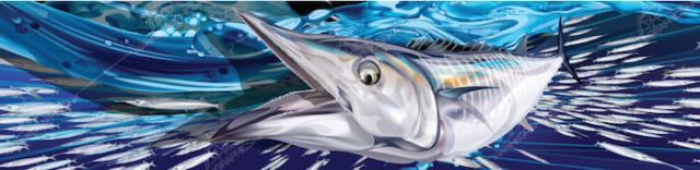 wahoo-boat-graphics